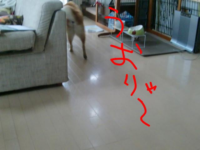f:id:maki-mama:20090517075926j:image:w300