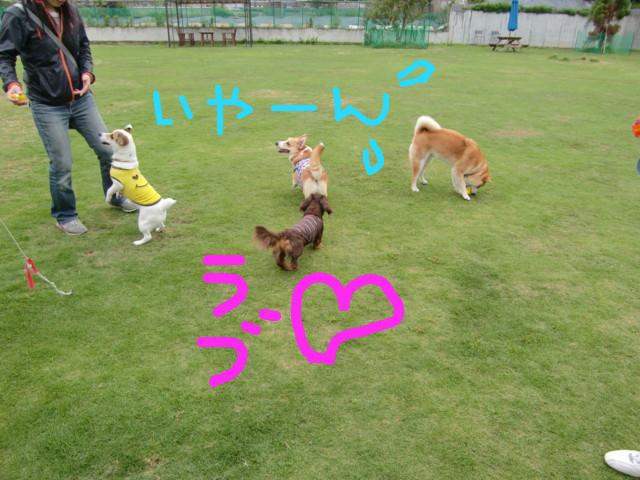 f:id:maki-mama:20090518061559j:image:w300
