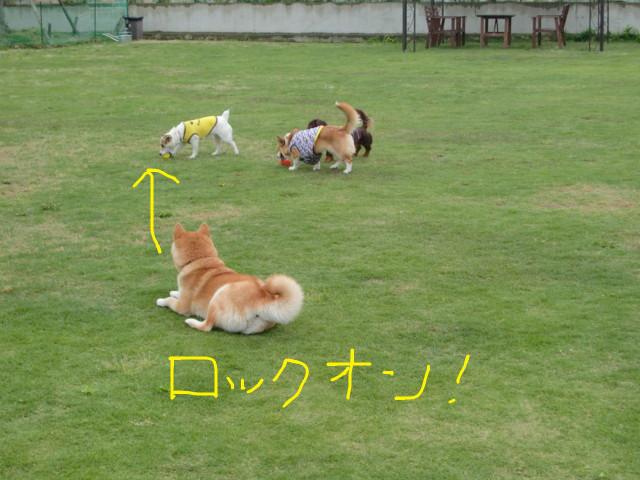 f:id:maki-mama:20090518061600j:image:w300