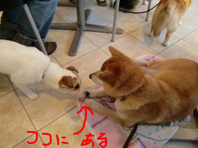 f:id:maki-mama:20090518061604j:image:w300