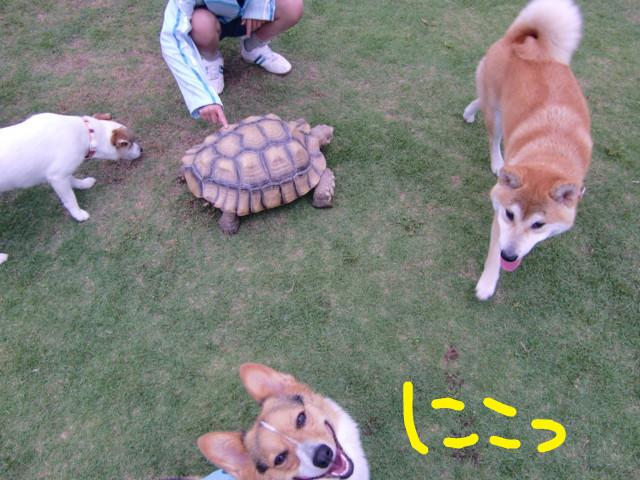 f:id:maki-mama:20090518061607j:image:w300