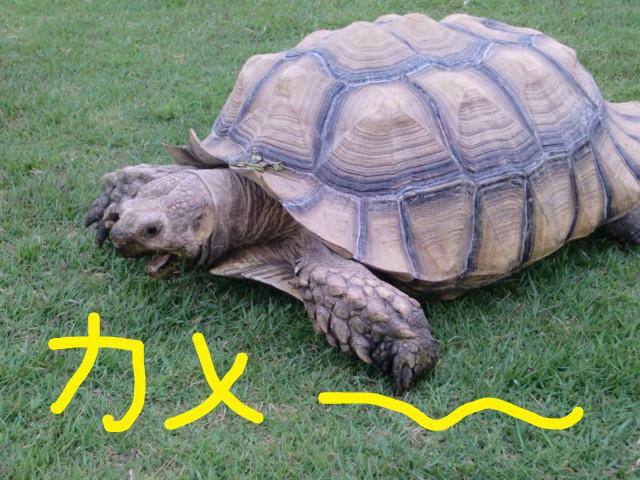 f:id:maki-mama:20090518061611j:image:w300
