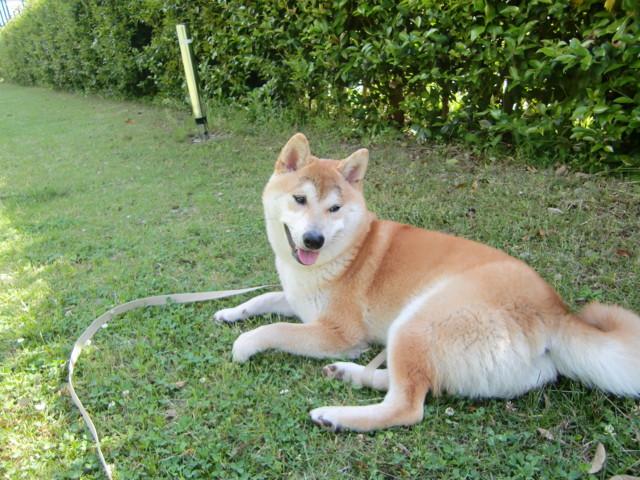 f:id:maki-mama:20090518094603j:image:w300