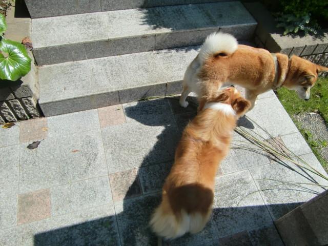 f:id:maki-mama:20090518094606j:image:w300
