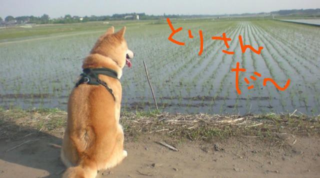 f:id:maki-mama:20090520223958j:image:w300