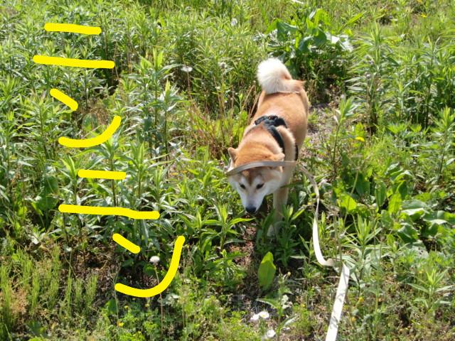 f:id:maki-mama:20090521135208j:image:w300