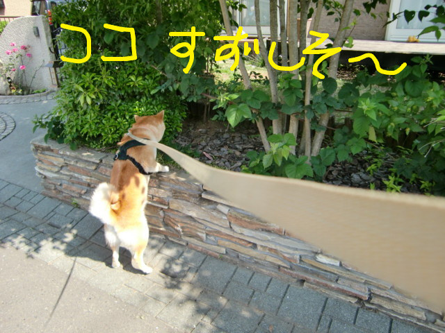 f:id:maki-mama:20090521135210j:image:w300