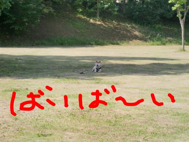 f:id:maki-mama:20090521135212j:image:w300