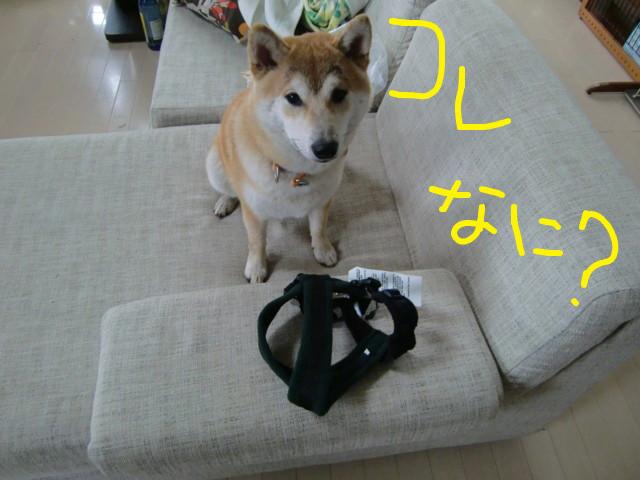 f:id:maki-mama:20090521135213j:image:w300