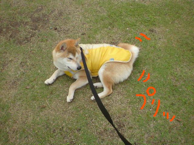 f:id:maki-mama:20090524091453j:image:w300