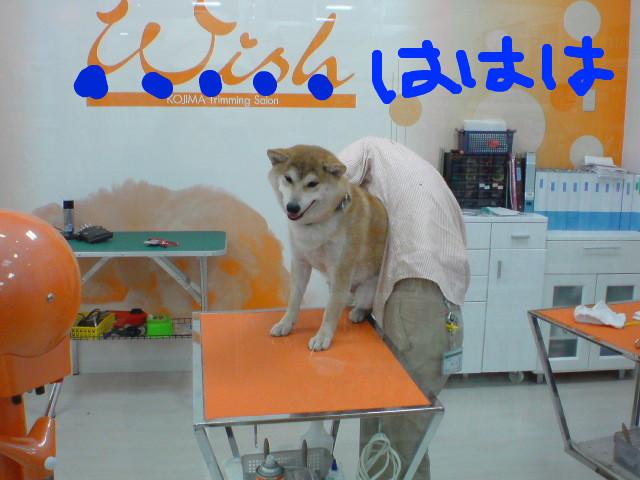 f:id:maki-mama:20090526213800j:image:w300