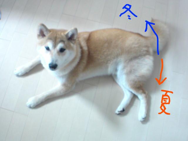 f:id:maki-mama:20090527094713j:image:w300
