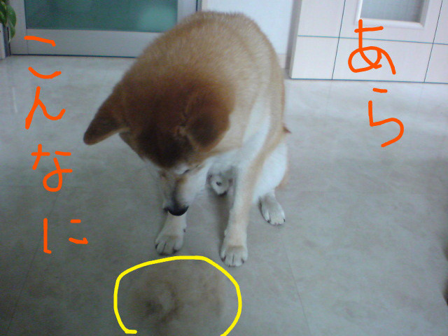 f:id:maki-mama:20090527094723j:image:w300
