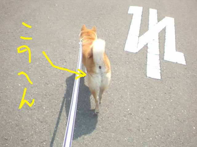 f:id:maki-mama:20090527094731j:image:w300