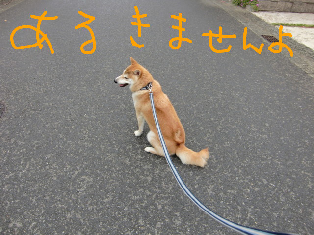 f:id:maki-mama:20090528090828j:image:w300