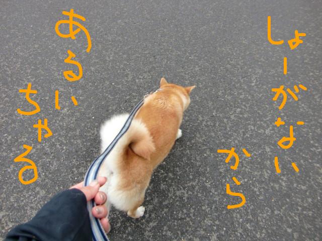 f:id:maki-mama:20090528090830j:image:w300
