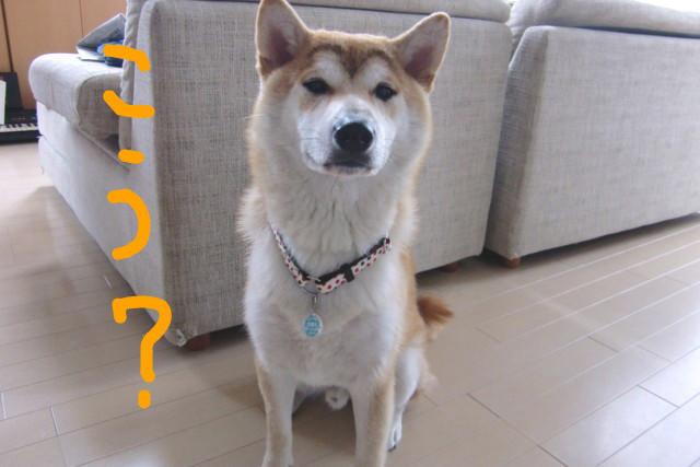 f:id:maki-mama:20090531145829j:image:w300