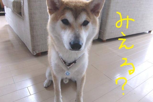 f:id:maki-mama:20090531145831j:image:w300