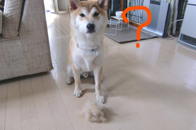f:id:maki-mama:20090603110347j:image:w300
