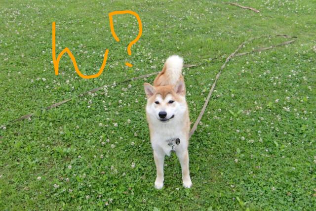 f:id:maki-mama:20090604110923j:image:w300