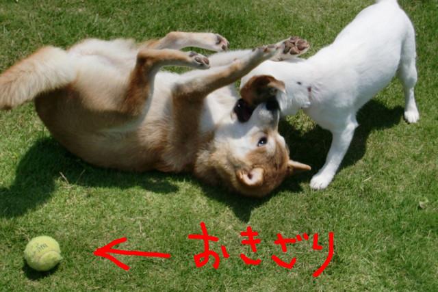 f:id:maki-mama:20090608110801j:image:w300