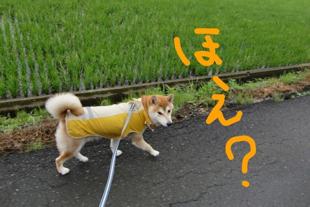 f:id:maki-mama:20090608110819j:image:w300