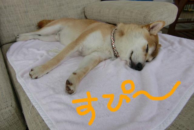 f:id:maki-mama:20090609130743j:image:w300