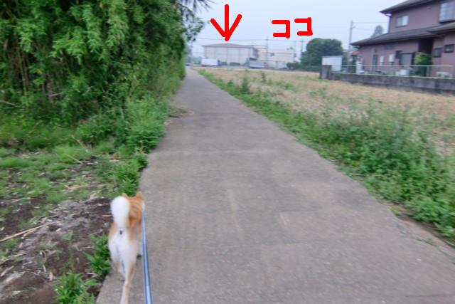 f:id:maki-mama:20090610151145j:image:w300