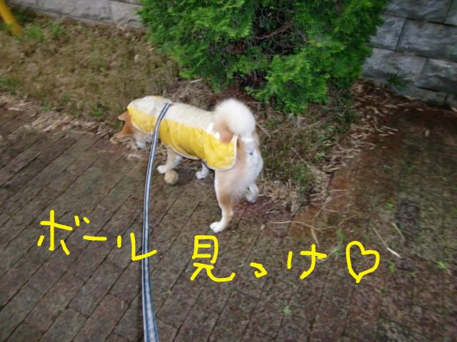 f:id:maki-mama:20090615074911j:image:w300