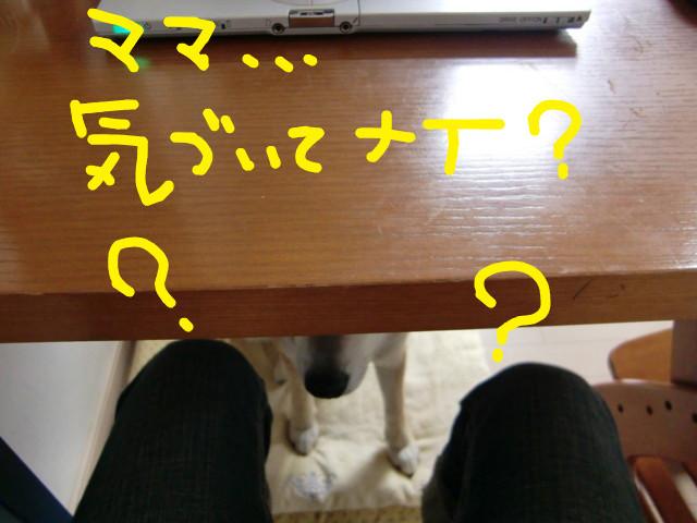 f:id:maki-mama:20090617080947j:image:w300