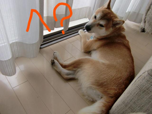 f:id:maki-mama:20090617080952j:image:w300