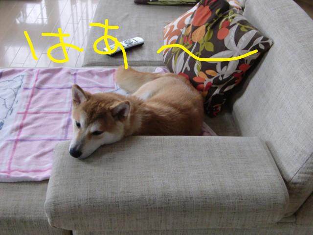 f:id:maki-mama:20090617080954j:image:w300