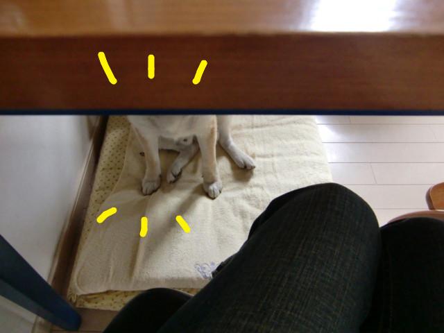 f:id:maki-mama:20090617080955j:image:w300