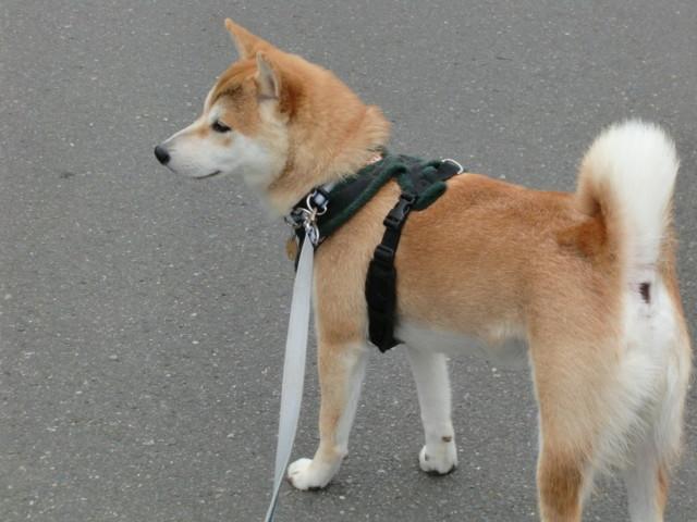 f:id:maki-mama:20090618214413j:image:w300