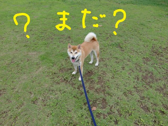 f:id:maki-mama:20090625100836j:image:w300