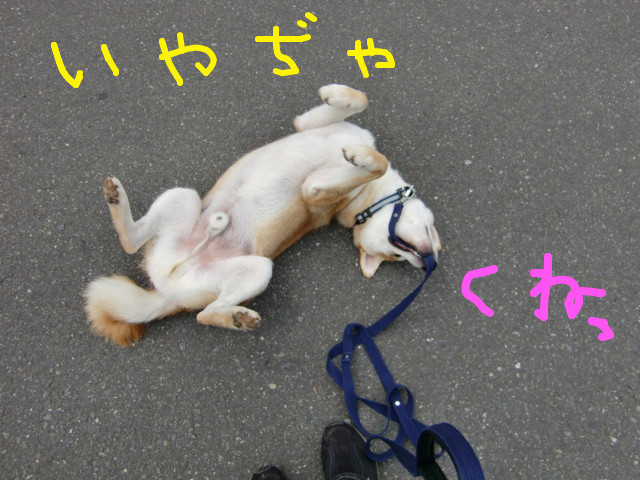 f:id:maki-mama:20090625100840j:image:w300