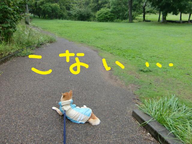 f:id:maki-mama:20090630100800j:image:w300