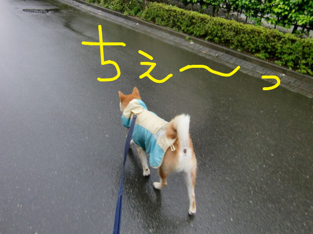 f:id:maki-mama:20090630100802j:image:w300