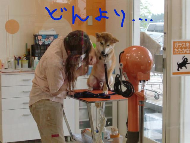 f:id:maki-mama:20090701185247j:image:w300