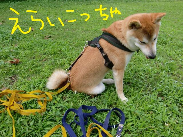 f:id:maki-mama:20090704104350j:image:w300