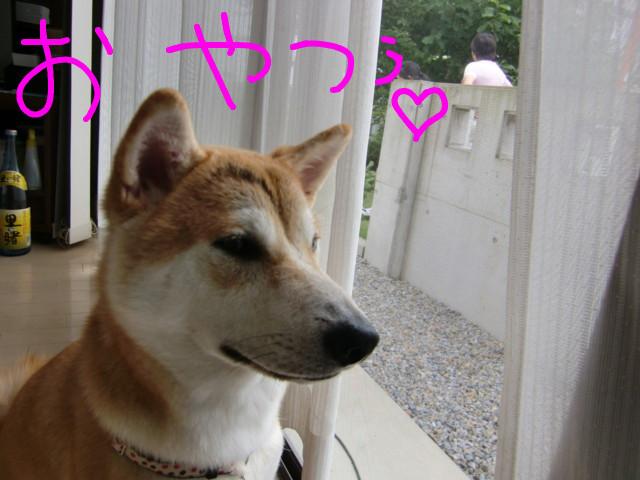 f:id:maki-mama:20090705144241j:image:w300
