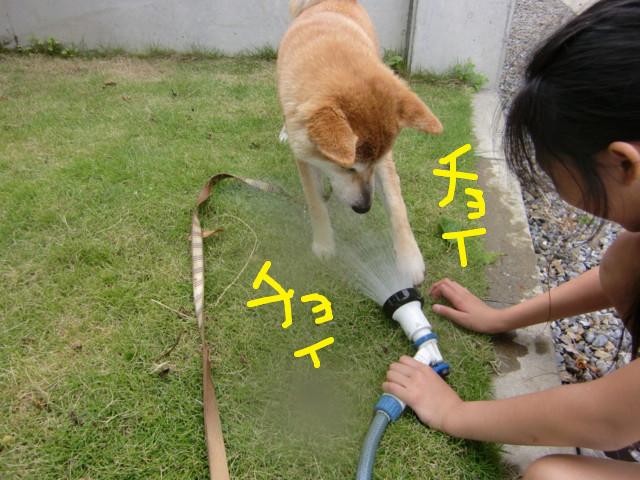 f:id:maki-mama:20090705144242j:image:w300
