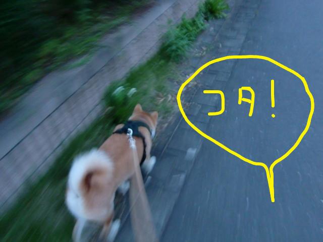 f:id:maki-mama:20090708061657j:image:w300