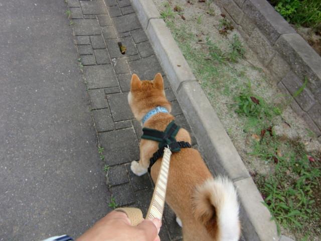 f:id:maki-mama:20090712092311j:image:w300