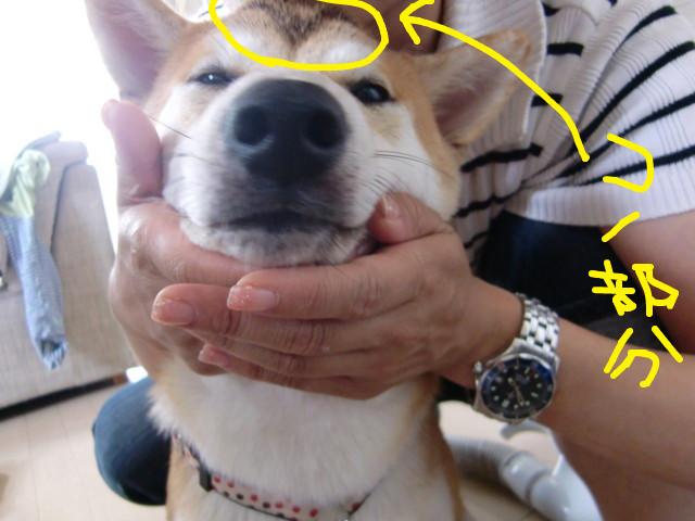 f:id:maki-mama:20090713212957j:image:w300