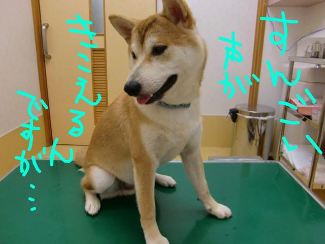 f:id:maki-mama:20090713212958j:image:w300