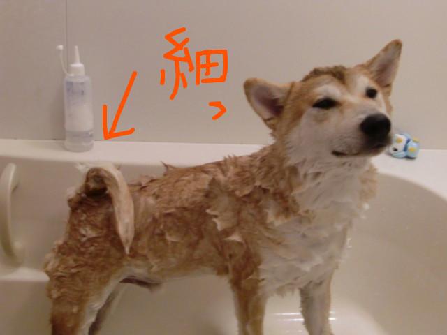 f:id:maki-mama:20090718095331j:image:w300