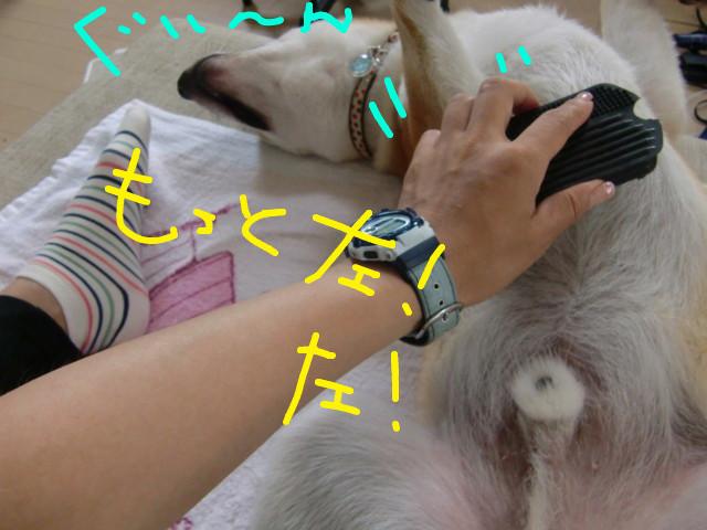 f:id:maki-mama:20090719093228j:image:w300