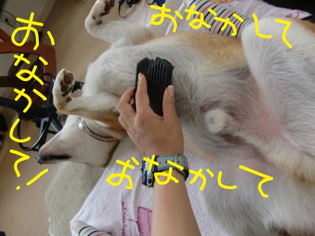 f:id:maki-mama:20090719093229j:image:w300