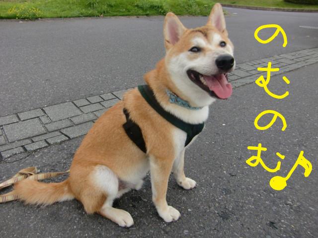 f:id:maki-mama:20090719093233j:image:w300